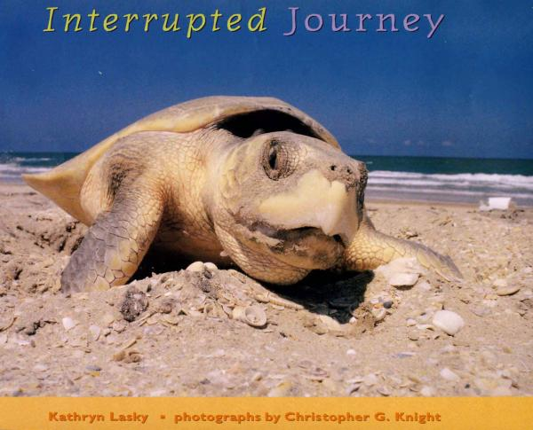 Interrupted Journey: Saving Endangered Sea Turtles Cover